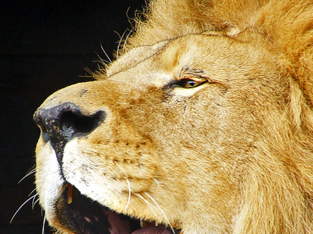 Lion of Judah, World-Shaker…here to heal your heart